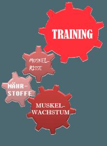 wie-funktioniert-muskelwachstum